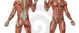 proteiny-rost-myshts-vred-polza-1